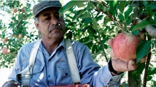Funcionarios nacionales y provinciales se reunirán para tratar la crisis del sector frutícola