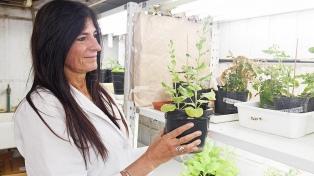 """Patentan un método para obtener especies vegetales """"más eficientes"""""""