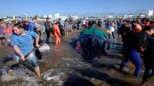 Trabajan contrarreloj para rescatar una ballena varada en la playa