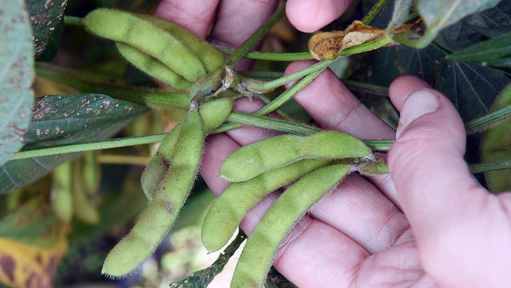 CÓRDOBA: La Mesa de enlace, en contra de que se suspenda la reducción de las retenciones a la soja