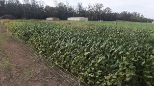 Estiman en 79,6 millones de toneladas la cosecha gruesa en la Argentina