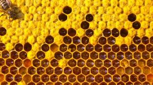 Sarquís destacó la apertura del mercado chino para la miel argentina