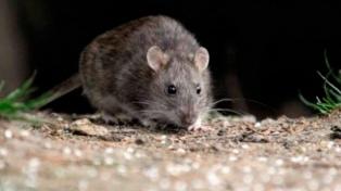 Hay cinco casos confirmados de hantavirus, uno de ellos fatal