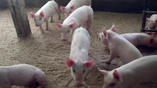 Prohíben el ingreso de carne porcina de EEUU a la provincia