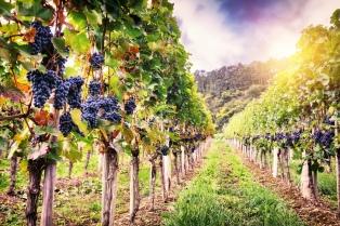 La producción mundial de vino cayó en 2017 a su nivel más bajo pero aumentó en la Argentina