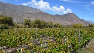 Productores vitivinícolas buscan impulsar sus vinos de extrema altura