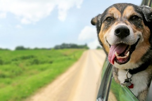 Los millennials son los que más adoptan e invierten en sus mascotas