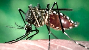 Se registran 3.000 casos de dengue y 56 de chikungunya en lo que va del año