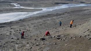Identifican especies marinas que habitaron la Antártida hace 65 millones de años