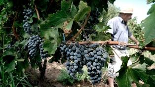 Cornejo destacó la importancia que tiene la vitivinicultura en la provincia