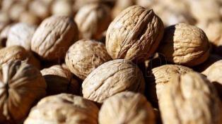 Neuquén realizó su primera exportación de nueces