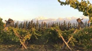 Entre Ríos busca recuperar su protagonismo en la producción de vinos