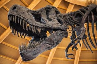 Moda que alerta: cada vez son más los fósiles de dinosaurio que terminan en casa de millonarios