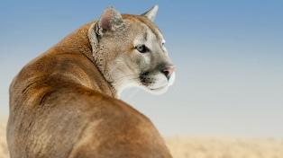 Condenan a un cazador furtivo que mató a un puma en una reserva natural