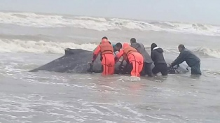 Rescataron a la ballena que encalló en la costa de Mar del Tuyú
