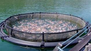 Alarma tras un fallo judicial en Chile que autorizó las salmoneras en el Canal Beagle