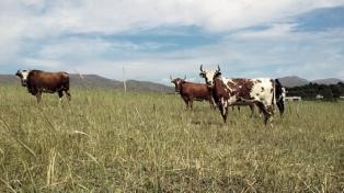 Se realizará en Villa Ventana la quinta jornada ganadera del sudoeste bonaerense
