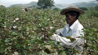 """""""La agricultura contribuye al cambio climático"""", dijo una científica argentina que participó del informe"""