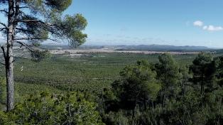 La ONU advierte sobre la degradación del bosque mediterráneo