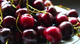 Productores frutícolas de Los Antiguos despachan primera exportación de cerezas a China