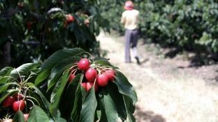 Productores de cerezas celebran el acuerdo con China