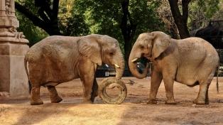El programa de conservación de especies cambia el sentido al ex zoológico porteño