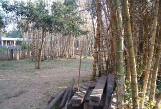 Promueven la elaboración de productos de bambú