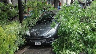 El temporal en Rosario dejó calles anegadas y denuncias por caída de árboles