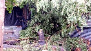 Un hombre de 65 años y su hijo murieron aplastados por un árbol en La Plata