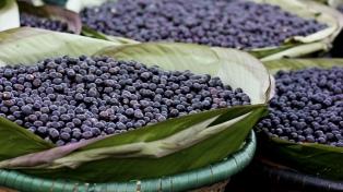 Incorporaron el fruto asaí al Código Alimentario Argentino