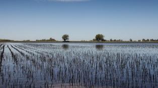 El Gobierno homologará la emergencia agropecuaria para las cuatro provincias inundadas