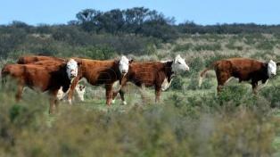 Río Negro, Neuquén y Carmen de Patagones exportan bovinos en pie a Chile