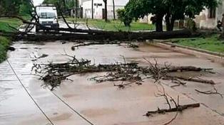 Un temporal de viento y lluvia provocó caídas de árboles y anegó barrios