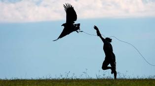Liberaron a un águila rehabilitada en el Ecoparque porteño