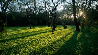 """Se estrena """"Chaco"""", un documental que refleja el desmanejo de los recursos naturales"""