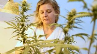 Investigadores descubren que el consumo crónico de compuestos de cannabis mejora la función cardíaca
