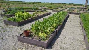 Proponen implementar huertas sostenibles