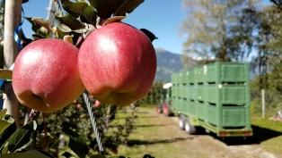 El Gobierno reglamenta la ley de emergencia frutícola en cinco provincias