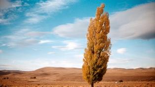 """""""Chubut, libertad y tierra"""" recorre una figura desconocida e ilumina aspectos de la Patagonia"""