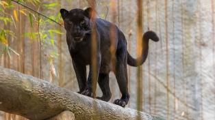 Se supera por primera vez la barrera de las 100.000 especies amenazadas de extinción