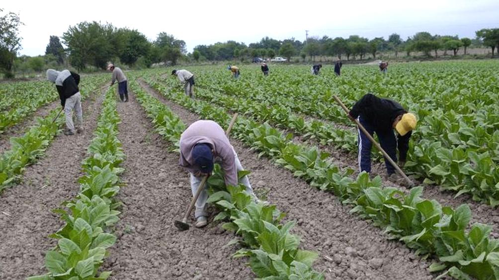 Entregan créditos por más de 3 millones de pesos para productores tabacaleros