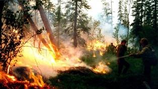 La ONG denunció que los incendios en Siberia ya quemaron más de 5 millones de hectáreas