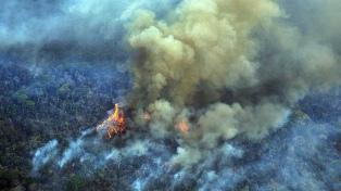 """Sergio Bergman dijo que el incendio en la Amazonia traerá """"una fuerte sequía y altas temperaturas"""""""