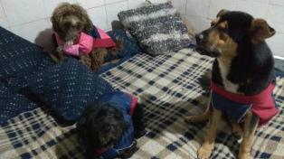 Aplicarán multas de hasta $150.000 por abandono de animales domésticos