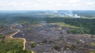Marcas globales amenazaron con dejar de comprar cuero a Brasil por los incendios en la Amazonia
