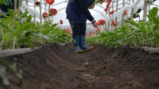 La provincia apuesta al desarrollo de la floricultura