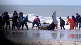 Lograron rescatar a cinco orcas y una murió