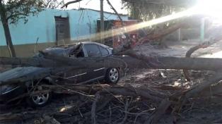Cortes de luz, árboles caídos y suspensión de clases por fuertes vientos
