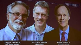 Fue para tres médicos que estudian la adaptación de las células