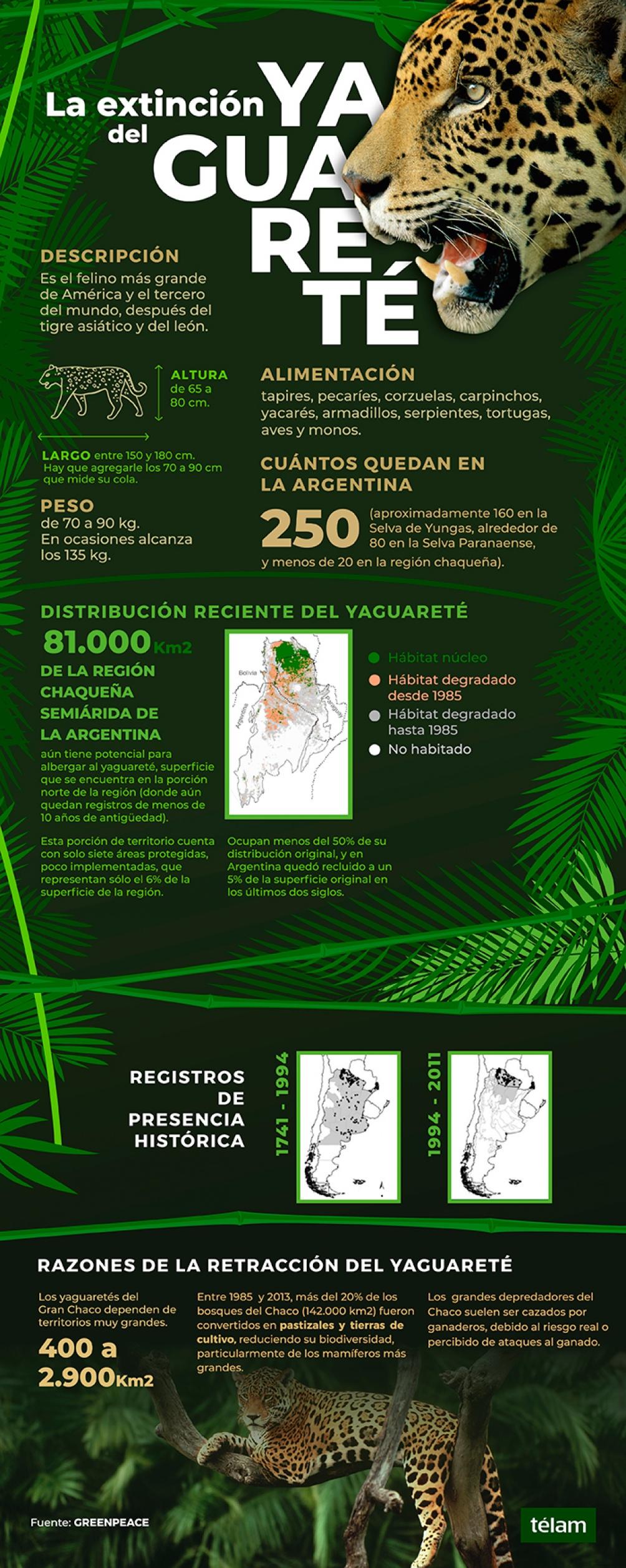 El Dia Internacional del Yaguareté se celebra desde 2018.